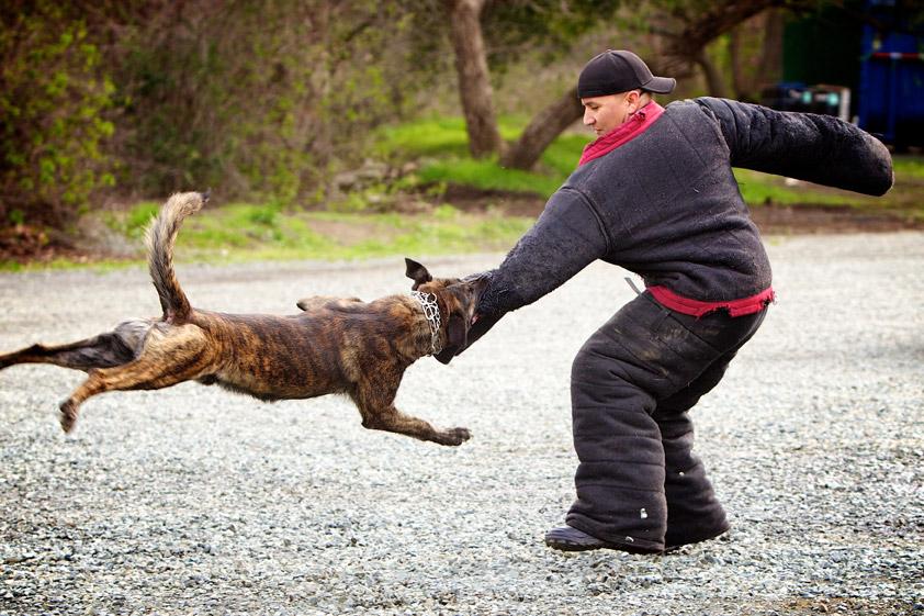 Dois-je prévenir ma compagnie d'assurance si mon chien mord quelqu'un ?