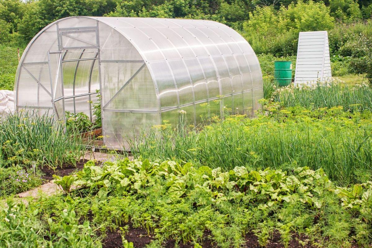 Bien choisir sa serre de jardin : que savoir  ?